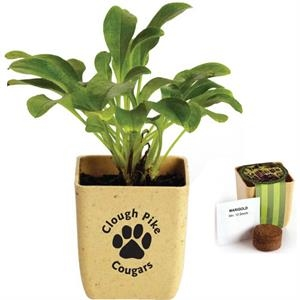 Flower Pot Set With Fully Biodegradable Fiber Pot