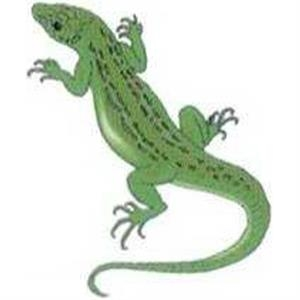 "Temporary Tattoos (tm) - Stock, Non Toxic, Hypoallergenic 2"" X 2"" Green Reptile Tattoo Is Fda Certified"