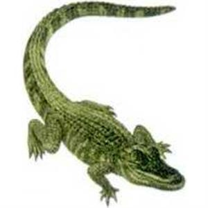 "Temporary Tattoos (tm) - Stock, Non Toxic, Hypoallergenic 2"" X 2"" Alligator Tattoo Is Fda Certified"