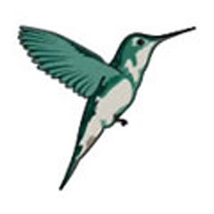 Hummingbird Stock Tattoo Designs
