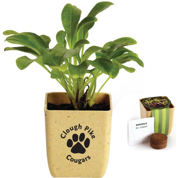 Flower Pot Set With Fully Biodegradable Fiber Pot Photo