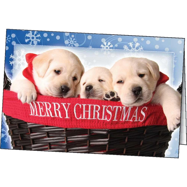 Christmas Surprise - Holiday Greeting Card Photo
