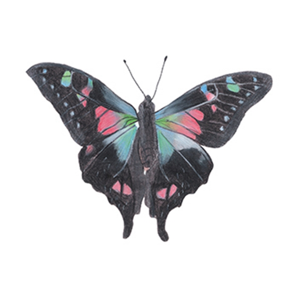 Nightshade Butterfly Temporary Tattoo