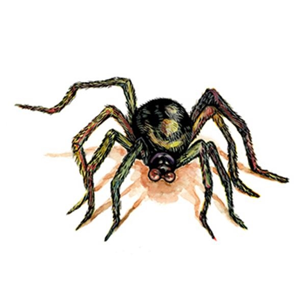 Brown Spider Temporary Tattoo - Brown Spider Temporary Tattoo