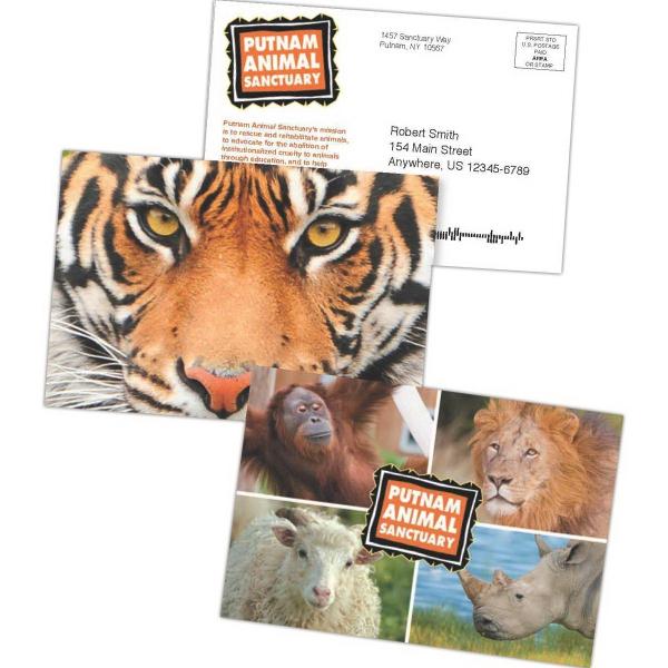 4 X 6 Lenticular Postcard W Full Color Front 1 Back
