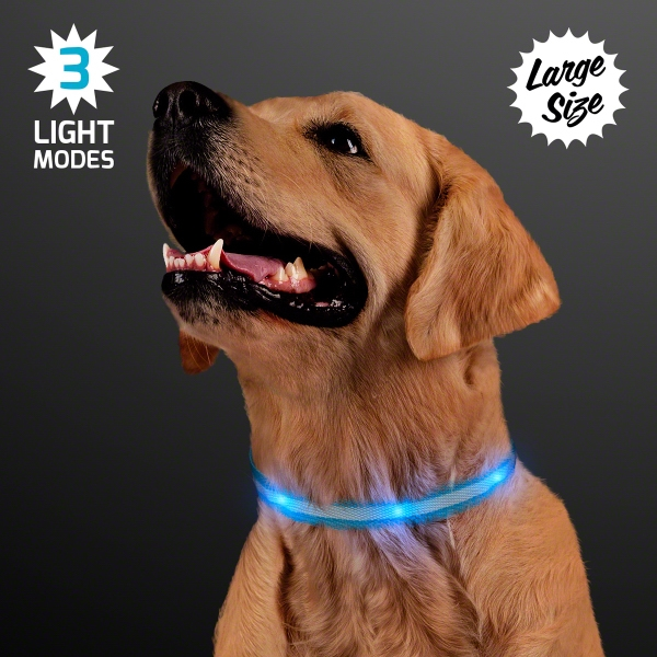 Blue Light Up Dog Collars, Large