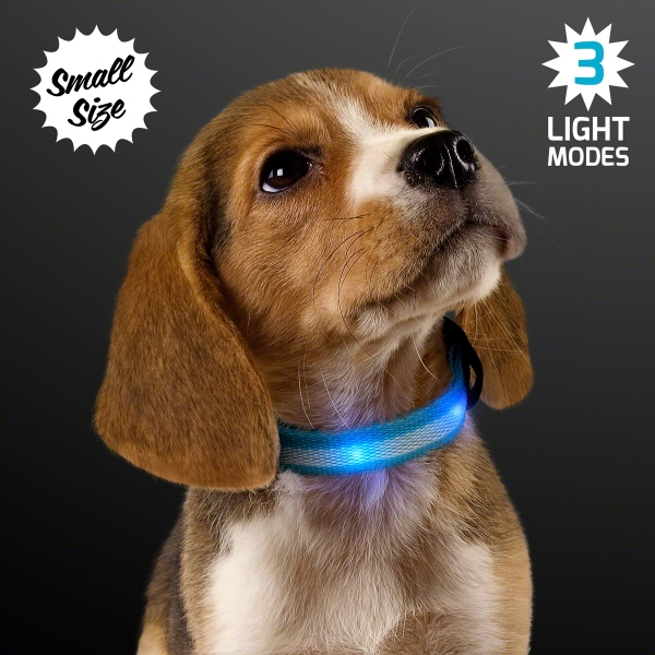 Blue Light Up Dog Collars, Small to Medium