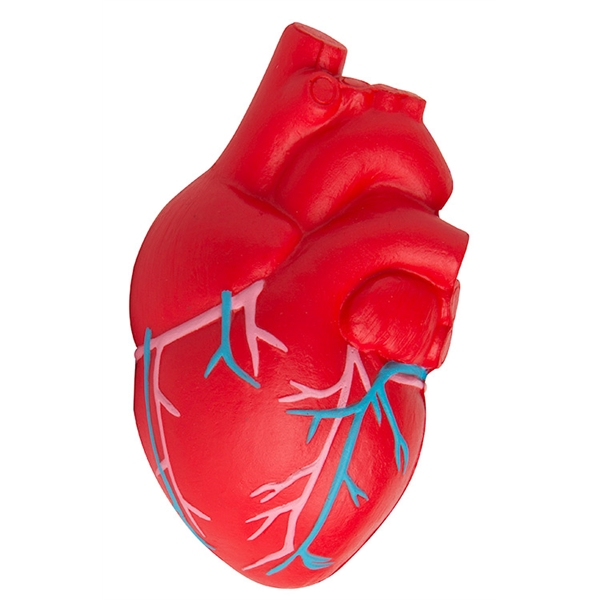 Squeezies® Heart (Anatomical with Veins) Stress Reliever
