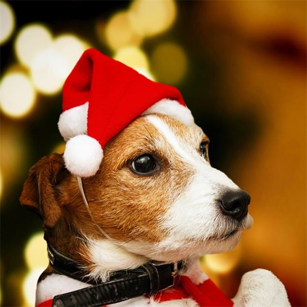 High-End Plush Pet Christmas Hat