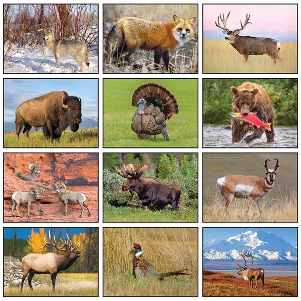 Wildlife Appointment Calendar