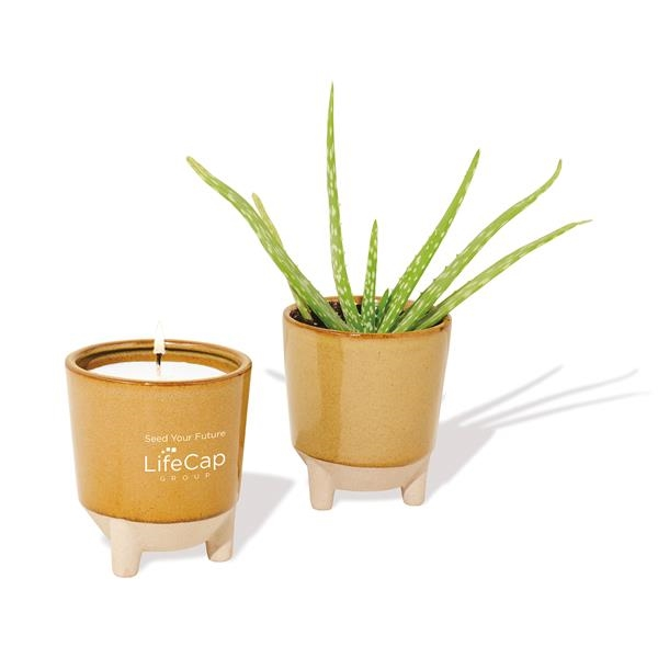 Modern Sprout® Glow & Grow Live Well Gift Set