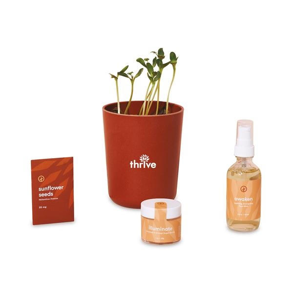 Modern Sprout® Shine Bright Take Care Kit - Sunflower