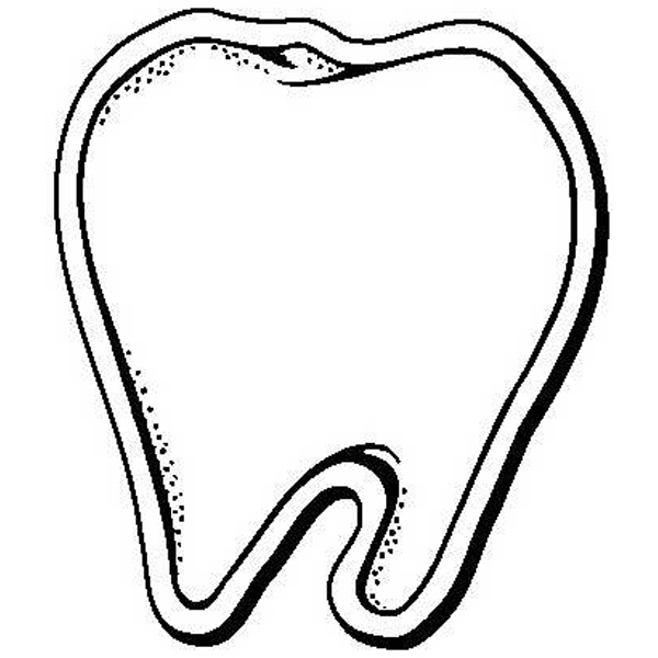 Tooth Shape Magnet