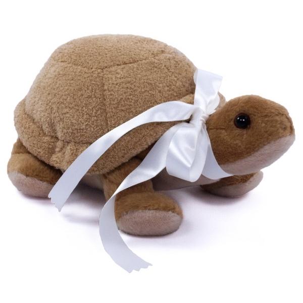 """8"""" Tank Desert Tortoise"""