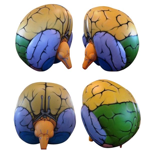 Custom Shaped Brain Inflatable Balloon
