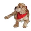Pet Bandannas - Triangular pet bandanas for small and medium sized animals.