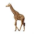 Giraffe Temporary Tattoo - Giraffe Temporary Tattoo