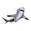 Shark Temporary Tattoo