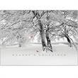 """Cardinals Card - New holiday greeting card with """"Season's Greetings"""" on the front, with a winter scene and wildlife."""
