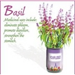 Grow Your Own Herbs and Flowers - Mini Plants - More than 30 different seeds are available for All-Included-Growing-Kit