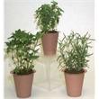 Assorted Mini Herbs in Pot - Mini Herbs in Pot