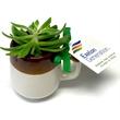 Assorted Succulent in Ceramic Mug - Succulents in Ceramic Mug