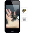 Augmented Reality Tattoos - Sea Turtle - Augmented Reality Temporary Tattoo: Sea Turtle