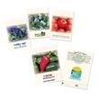Standard Seed Packet - Seed packet with 42 varieties
