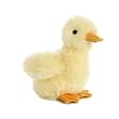 "8"" Duckling - 8"" Duckling"