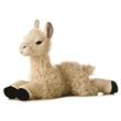 """12"""" Llama"""
