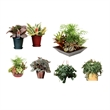 House Plant - House plant, each plant comes with its own specific plant care instructions.