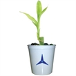 """Lucky Bamboo - Single shoot bamboo plant in a 3"""" plastic cup and marbles."""
