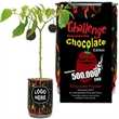 Hot Chocolate Habanero Pepper - Like chocolate? like hot peppers? Just open...Water...Watch it Grow!!!