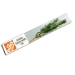 Live Evergreen Tree Seedling - Live Evergreen Tree Seedling in Bag