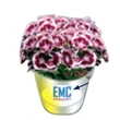 "3"" Silver Metal Flower Bucket GroPot Kit - GroBucket garden kit includes bucket or pail, seeds, soil and nutrients."